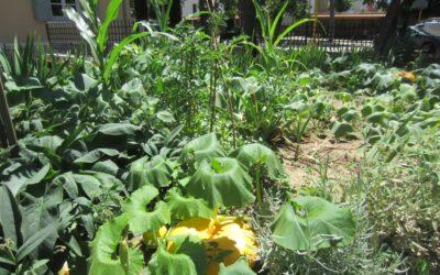 Le petit jardin de Pierre Termier – Ecole Pierre Termier, Lyon 8